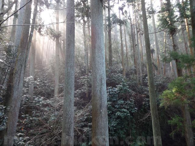 山と高原地図がない千葉県の山々の魅力 と 標高一覧 画像