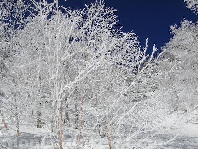 冬の山行画像23枚ほど【避暑画】〜新雪期・厳冬期〜 画像